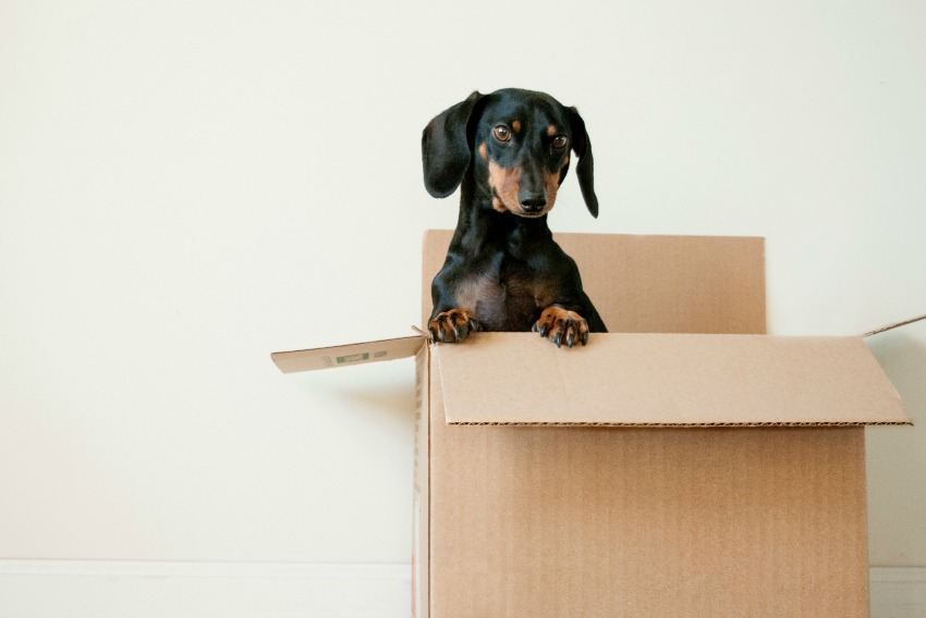 Moving? 6 Priceless Tips for the Big Day